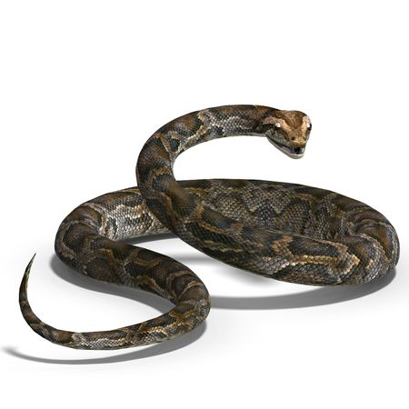 serpentes: 3D rendering of a royal python Stock Photo
