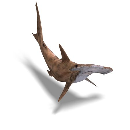 3D rendering of a hammerhead shark