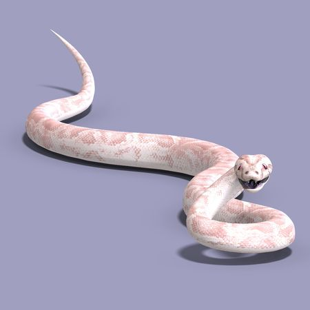 serpentes: 3D rendering of a white ball python with shadow over white Stock Photo