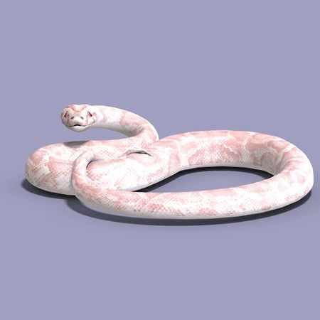 falsity: 3D rendering of a white ball python  Stock Photo