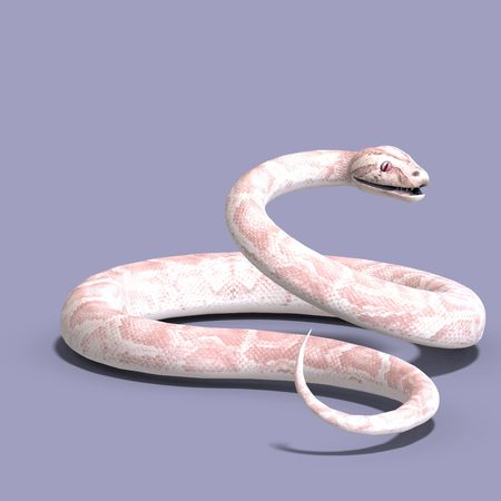 serpentes: 3D rendering of a white ball python