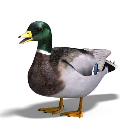 anatidae: 3D rendering with clipping path and shadow over white