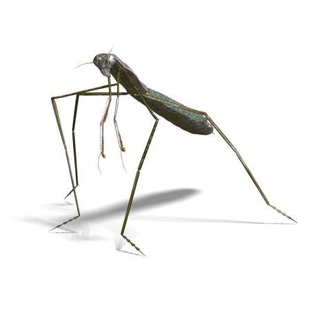 mantis: 3D rendering of a praying mantis