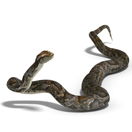 serpentes: 3D rendering of a royal python