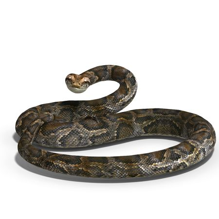 serpentes: 3D rendering of a royal python with shadow over white Stock Photo