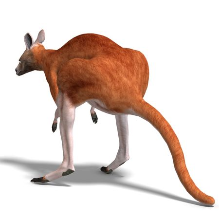 saltation: 3D rendering of a big red kangaroo