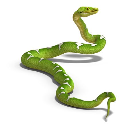 serpentes: 3D rendering of a  green tree python