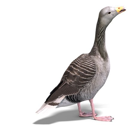 anatidae: 3D rendering of a grey goose Stock Photo