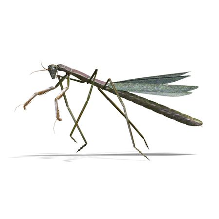 hopper: 3D rendering of a praying mantis
