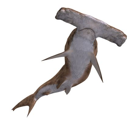 dunking: 3D rendering of a hammerhead shark