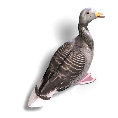 anatidae: 3D rendering of a grey goose with clipping path and shadow over white