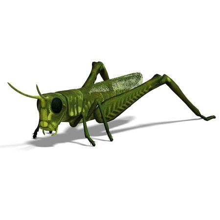 saltation: 3D rendering of a green grasshopper with clipping path and shadow over white