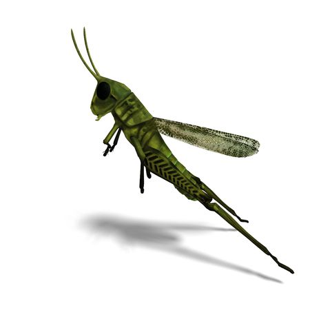 3D rendering of a green grasshopper with clipping path and shadow over white