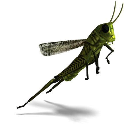 3D rendering of a green grasshopper with clipping path and shadow over white photo