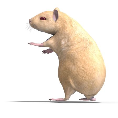 incisor: 3D rendering of a sweet hamster with clipping path and shadow over white