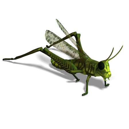acrididae: 3D rendering of a green grasshopper