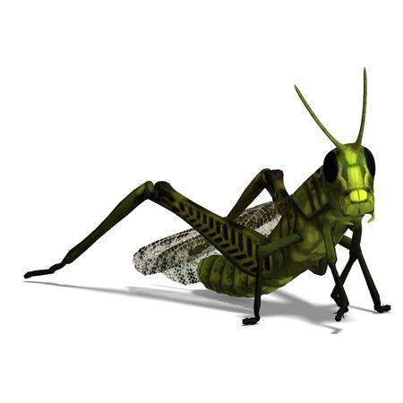 saltation: 3D rendering of a green grasshopper