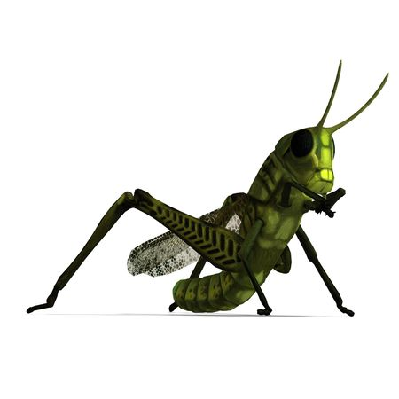 caelifera: 3D rendering of a green grasshopper