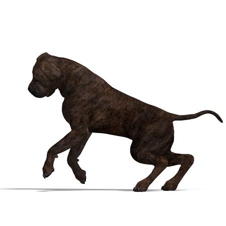 American Mastiff Dog. photo