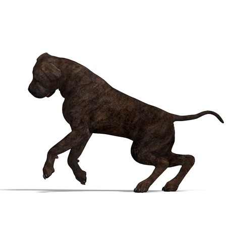 saltation: American Mastiff Dog.