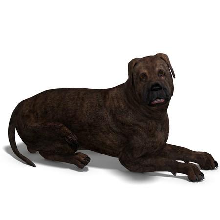 bullmastiff: American Mastiff Dog.