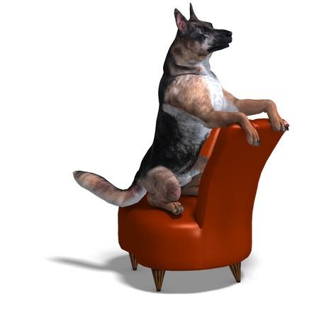 beggary: German Shepherd Dog.  Stock Photo