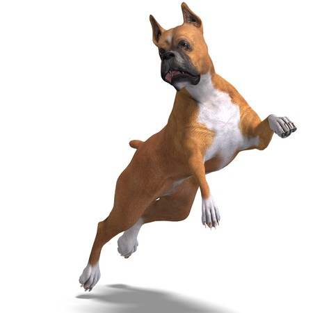 saltation: German Boxer Dog