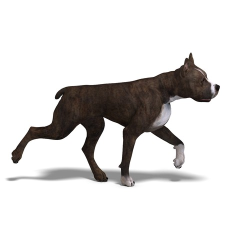 dog running: American Staffordshire Terrier Dog