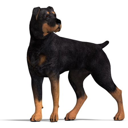 rott: Perro Rottweiler. Procesamiento de 3D  Foto de archivo