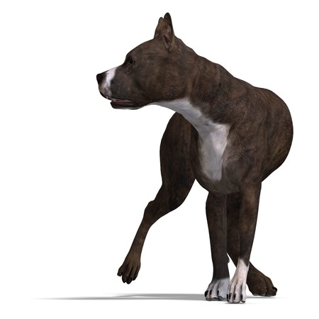stafford: American Staffordshire Terrier Dog. 3D rendering Stock Photo