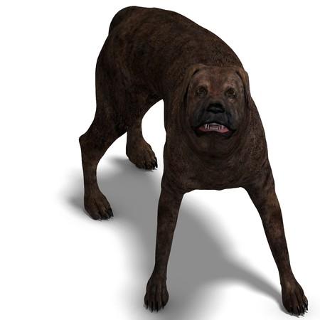 carnivora: American Mastiff Dog.