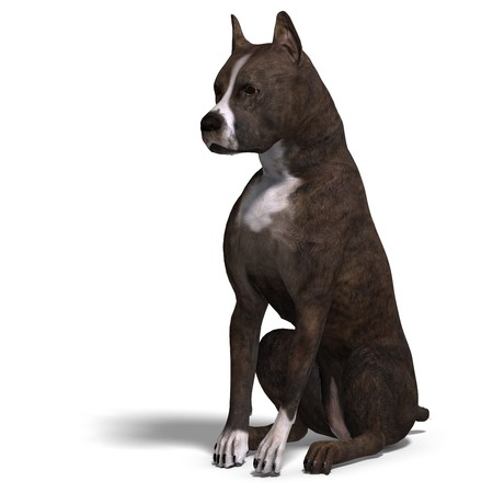 american staffordshire terrier: American Staffordshire Terrier Dog. Stock Photo