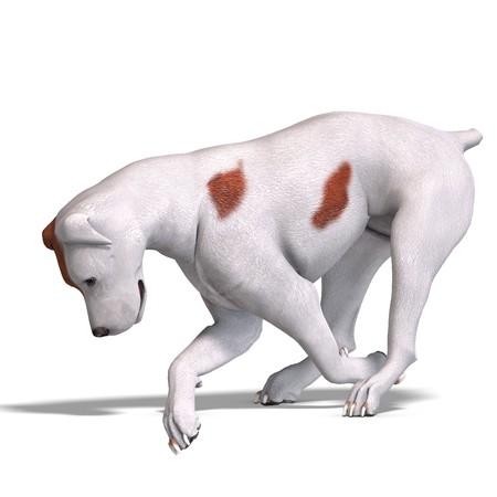 spotter: Parson Russel Terrier Dog. 3D rendering