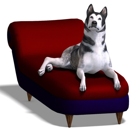 alaskan malamute: Alaskan Malamute Dog. 3D rendering with shadow over white