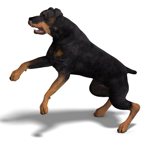 carnivora: Rottweiler Dog. 3D rendering with shadow over white