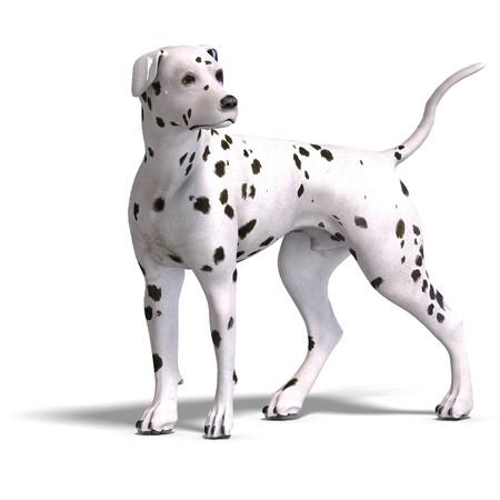 animalia: Dalmation Dog.