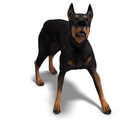 assail: Black Doberman Dog.  Stock Photo