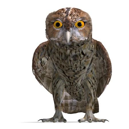 tawny: Tawny Owl Bird.