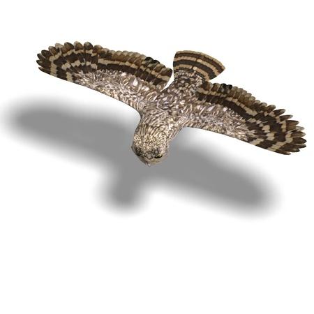 Little Owl Bird photo
