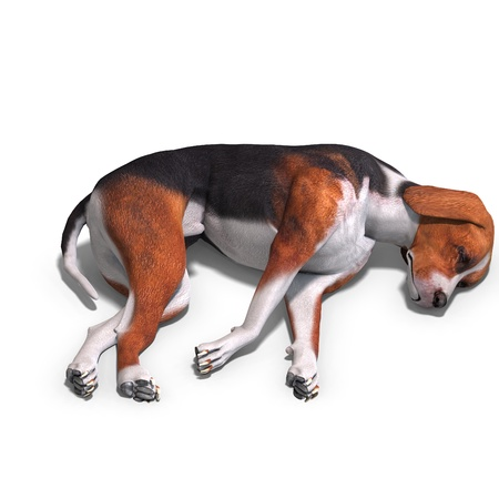 perish: Austrian Black Dog Stock Photo