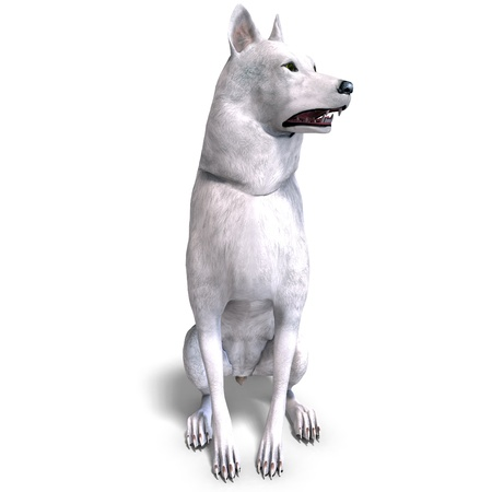 carnivora: White Wolf. 3D rendering and shadow over white