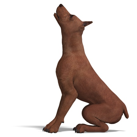 carnivora: Miniature Pinscher Dog. 3D rendering  and shadow over white