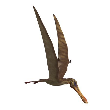 peering: Dinosaur Anhanguera Pterosaur. 3D rendering and shadow over white