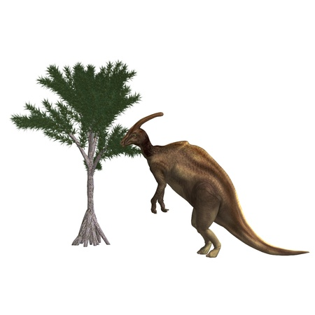 tucker: Dinosaur Parasaurolophus. 3D rendering and shadow over white Stock Photo