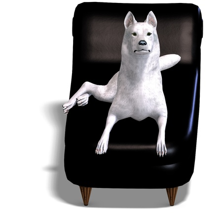 lupus: White Wolf. 3D rendering  and shadow over white