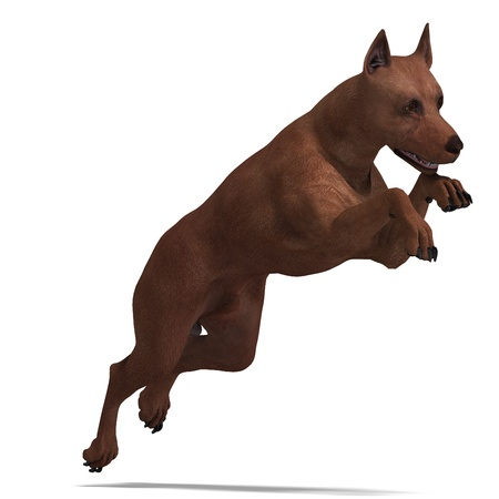 saltation: Miniature Pinscher Dog. 3D rendering