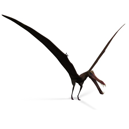 swoop: Dinosaur Anhanguera Pterosaur. 3D rendering