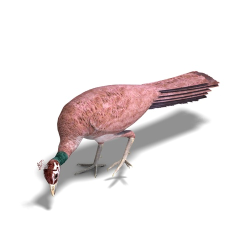 femme: beautiful female peahen or peacock. 3D rendering