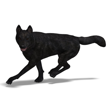 chasing: Black Wolf. 3D rendering
