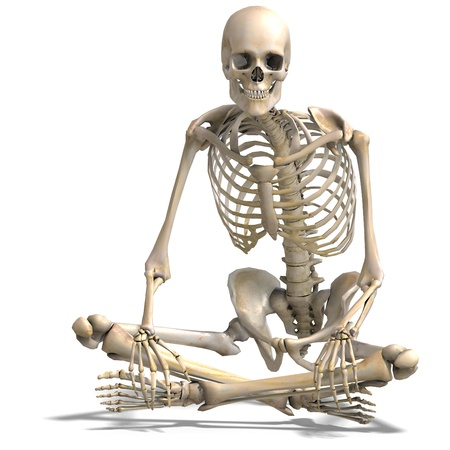 anatomical correct male skeleton. 3D rendering